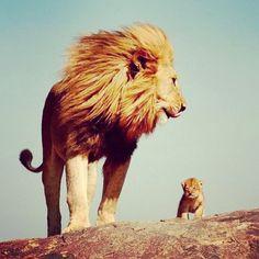 leão e seu filhotinho
