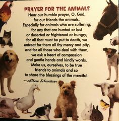 Prayer for the animals all about animals, animals and pets, cute animals, pet Pet Quotes Cat, Animal Quotes, Pet Poems, All About Animals, Animals And Pets, Cute Animals, Pet Loss Grief, Affirmations, Special Prayers