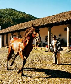 At Hacienda Zuleta in Ecuador, a riding horse is trained by skilled hands.