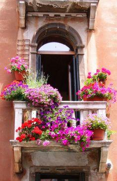 Pretty balcony and window boxes, Venice, Italy Window Box Flowers, Window Boxes, Flower Boxes, Balcony Flowers, Potted Flowers, Balcony Plants, Beautiful Gardens, Beautiful Flowers, Beautiful Places