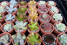 Spreesy is Joining the CommentSold Family! Succulent Wedding Favors, Wedding Favours, Buy Succulents Online, Selling On Instagram, Selling On Pinterest, Clay Pots, Rosettes, Special Occasion, Plants