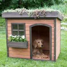 Boomer & George Lucky Green Roof Dog House - ROC 161103B