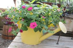 Such a cheery summer pot. I love the yellow watering can used as a pot.