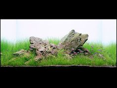 Aquatic Eden: Iwagumi and Sanzon Iwagumi Aquariums - Aquascaping Aquarium Blog