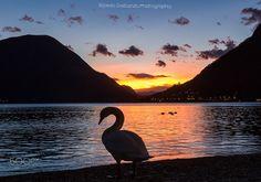 The swan and the sunset, Sunset silhouette in Lugano Lake Sunset Images, Sunset Silhouette, Dawn And Dusk, Gods Creation, Nature Wallpaper, Swan, Lugano, Sunrise, Bird