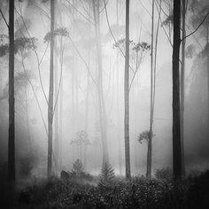 Hengki Koentjoro's Breathtaking Misty World, black and white, photo, photograph, forest, fog, high, moody
