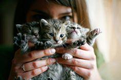 Cats!  by Stanislaw Skotnicki, via 500px