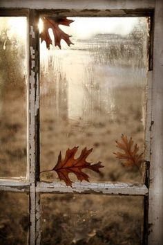 Fall Painting: Oak Leaves by The Window Oak Leaves, Autumn Leaves, Fall Inspiration, Travel Inspiration, Window View, Window Panes, Happy Fall Y'all, Autumn Day, Autumn Morning