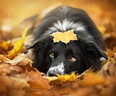 Собачья радость: жизнерадостные снимки очаровательных собак | Фотография | Фотография