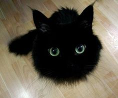 Cat, or Miyazaki soot ball? (From here.)