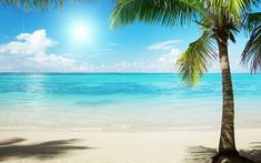 Tropical Beach Images