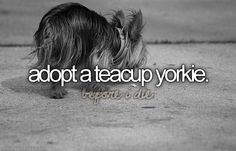 I want to adopt a puppy..