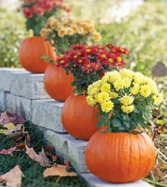 Pumpkin Surprise - Turn your pumpkins into mum containers