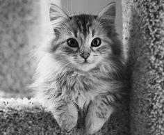 cat-cats-cute-kitties-Favim.com-3532862.jpg (474×390)