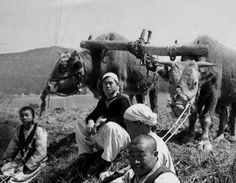 Pyongyang ca 1910-1930. Farmers in field with yoked oxen.
