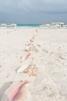 Conch Shells lining the aisle in a beachside wedding