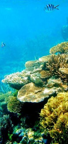The Great Barrier Reef. Australia  Need to go here before it's gone.