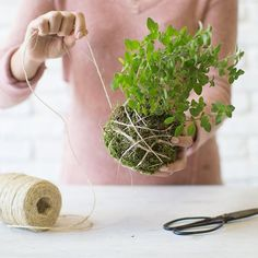 Create a hanging kokedama arrangement. Kokedama, Japanese for a moss ball, replaces a traditional planter used for container gardening. Instead, wrap an outer layer of moss around a ball of soil to create a sculptural indoor or outdoor garden featuring succulent plants or hardy herbs. #Kokedamas