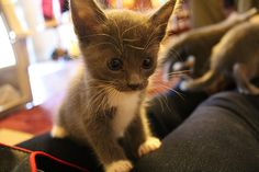 look at the kitty!!!