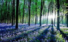Forest shake-up to recommend planting more trees - Telegraph