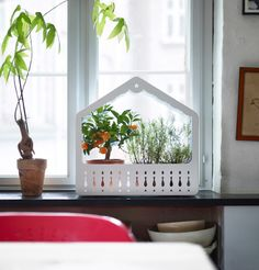 IKEA PS 2014 Greenhouse Containing Herbs And Plants On An Indoor Windowsill
