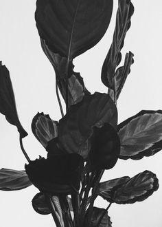 theleoisallinthemind:  by Evelyn Dragan - Plante Lumina Umbre