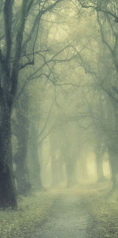 """Foggy Hazel Tree-Lined Path – """"End of November"""" by Norbert Maier   