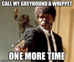 Call my greyhound a whippet one more time