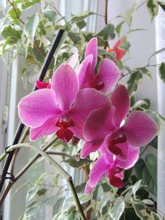 Az orchidea tartás sikere jórészt az öntözéstől függ, amiről most minden titkot felfedünk. Planting Succulents, Garden Plants, Indoor Plants, Horse Flowers, Cactus, Flower Pillow, Neem Oil, Rooftop Garden, Garden Pictures
