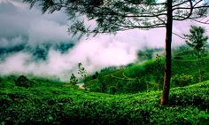 see The beauty Of Kerala In The Destinations South India Tour Packages By The Imperial India Tours www.book-india-tour.com