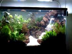 Freshwater Aquarium Plants, Planted Aquarium, Aquascaping, Fresh Water, Videos, Waterfall, Youtube, Aquarium Design, Boat Building