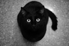 This looks like my Lou Kitty!