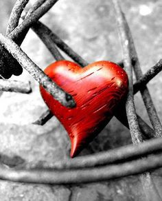 This heart can no longer be bound in iron barb......otherwise it will make no more sound. Break this bound before I fall to the ground since it has been charred... Deep thoughts