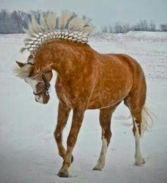 Dappled palomino morgan mare with flying diamond/lattice/continental braided mane Most Beautiful Animals, Beautiful Horses, Horse Hair Braiding, Horse Mane, Horse Horse, Horse Saddles, Morgan Horse, Majestic Horse, All The Pretty Horses
