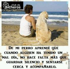 Mi perro...