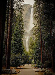 Yosemite Falls, California. I HAVE walked this path, seen those falls, and the magnificent trees.