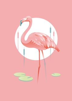 A Flamingo Illustration - personal project done with Adobe Illustrator and finished in Photoshop. Flamingo Wallpaper, Wallpaper Iphone Cute, Of Wallpaper, Flamingo Painting, Flamingo Decor, Flamingo Illustration, Love Illustration, How To Draw Flamingo, Chanel Wallpapers