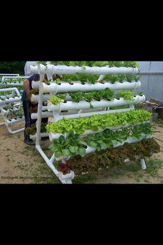PVC Veggie garden. Modified for indoor winter gardening? In the mud room?
