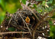 Bird is the word King Jr, Bird, Birds