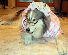 Big Bad Wolf / Grandma: This two-in-one dog costume is great for huskies, collies, fluffy & large wolf looking dogs.   MATERIALS: All you need is a shower cap, glasses, a U shaped