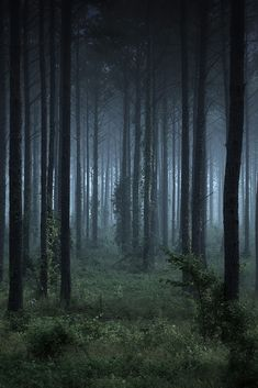 Magical and Mystical forest! Aline