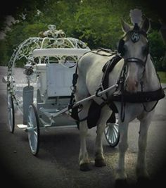 Another nice photo of the Cinderella Carriage and Duke posing for the camera