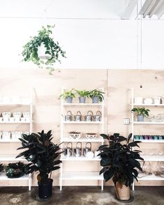 plants | pots | design (@nicheboston) • Instagram photos and videos