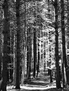 Paysages naturels (photographies noir et blanc) Affiche sur AllPosters.fr