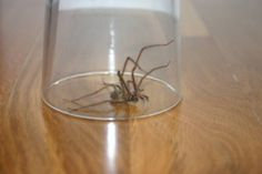 After hearing about that house in Carlow with over 100 Killer Spiders, we're suddenly in defence mode against the 8 legged critters! Get Rid Of Spiders, How To Get Rid, Suddenly, Don't Worry, Simple Way, Community, News, Photos, Top