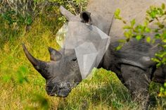 Rinoceronte/Rhino by Andre Botha – Moderimage
