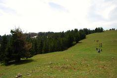 Trekking #Sila  #Calabria - Macchialonga