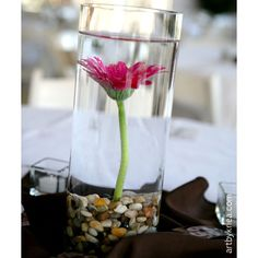 Maybe done with a white daisy and a submersible light in the rocks. Daisy Decorations, Centerpiece Decorations, Reception Decorations, Baby Shower Decorations, Wedding Centerpieces, Wedding Types, Wedding Colors, Wedding Flowers, Rustic Wedding