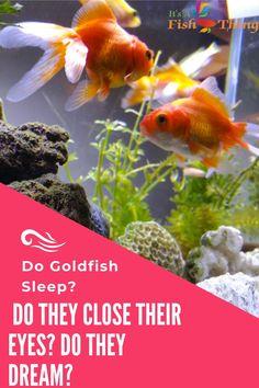 900 Fish Care Tips Tricks Ideas In 2021 Fish Care Fish Fish Tank