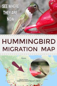 Use this map to see where hummingbird migrations are in the United States and Canada. - Hummingbird Feeder - Ideas of Hummingbird Feeder Hummingbird Nectar, Hummingbird Plants, Ruby Throated Hummingbird, Hummingbird Swing, Hummingbird Photos, Hummingbird Meaning, Hummingbird House, Hummingbird Symbolism, Hummingbird Habitat